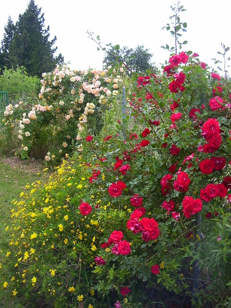 huerto jardin ecologico razones para integrar huerto y jardin