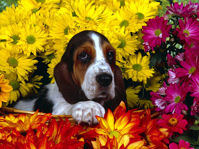 puppies wallpapers. Dogs And Puppies Wallpapers