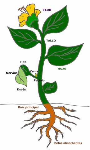5 plantas aromaticas yahoo dating 10