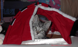 gray tiger kitten in tiny tent