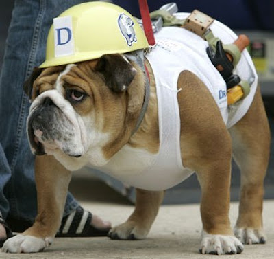 over and finally my award goes to construction worker dog