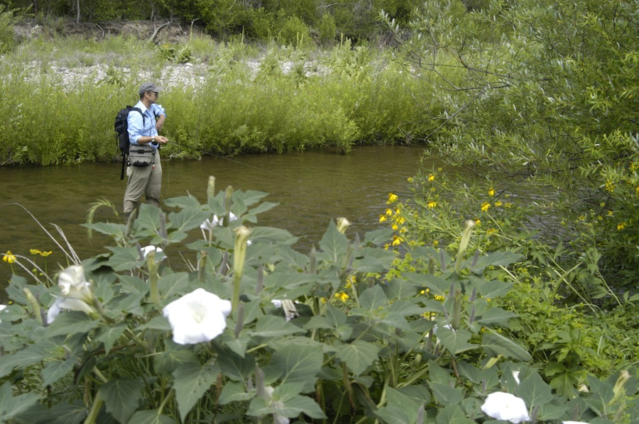 Eat more brook trout the heart of the gila for Gila river fishing