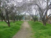 Casas Viejas
