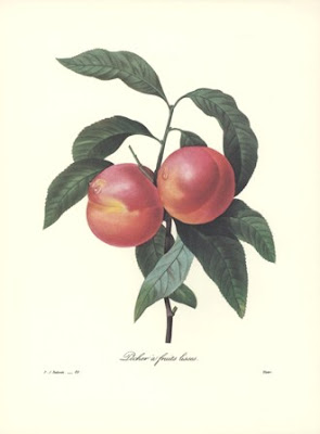 Living The Sweet Life: Botanical Fruit Prints * REDOUTE