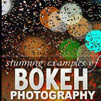 Stunning+Examples+of+Bokeh+Photography+wallpaper Stunning Examples of Bokeh Photography