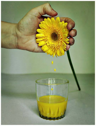 Gerbera Juice by chabruphotography Colors Around Us: Yellow Photography Inspiration