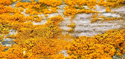 Yellow Lichen At Fort Flagler by AaronPlotkinPhoto Colors Around Us: Yellow Photography Inspiration
