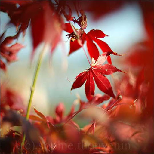red+wind+by+prismes Gorgeous Red Color Inspired Photography