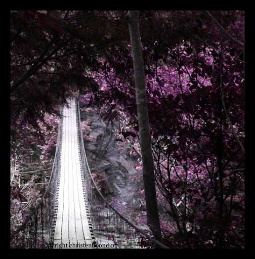 Purple Suspension by Hallow2 The Purple Power | Stunning Photography Feature