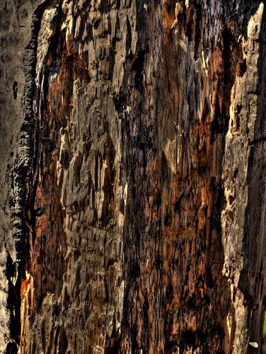 Texture 61 by Superior Stock 80+ Free High Quality Wooden Texture Packs
