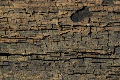 Cracked Wood 1 by objekt stock 80+ Free High Quality Wooden Texture Packs