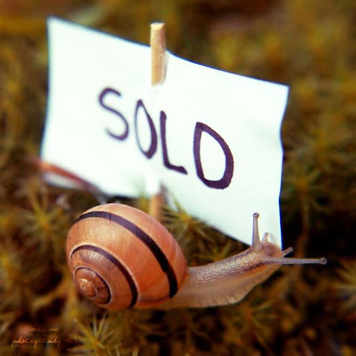 Mr  Snail has got new house by Megson Conceptual Photography: Pictures Speak a Thousand Words