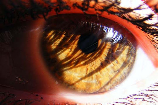 Sun+loses+shine+across+your+eyes 30+ Mesmerising Macro Photos of the Human Eye | Photography Inspiration