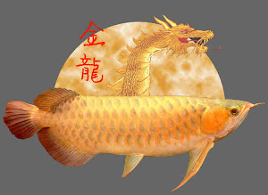 The Dragon Fish From Asia