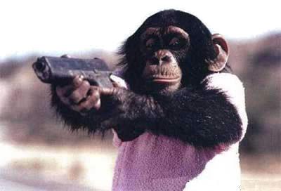 [monkey-gun.jpg]