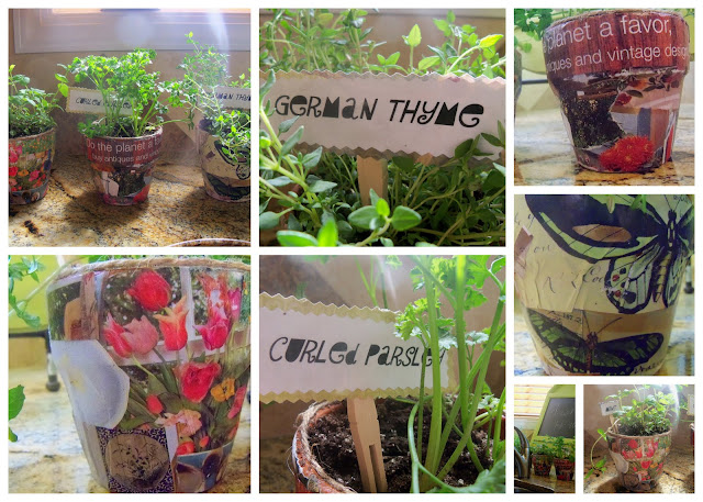 herbs How to Mod podge on terracotta pots