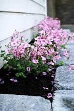 Bed i hagen