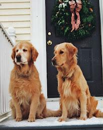 Annie (1992-2005) & Lucy