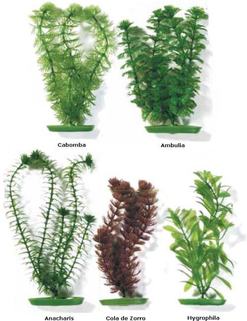 Las Plantas.
