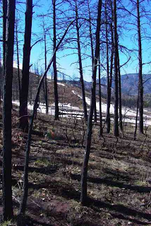 North edge of Mason Gulch Burn, Feb. 26, 2007