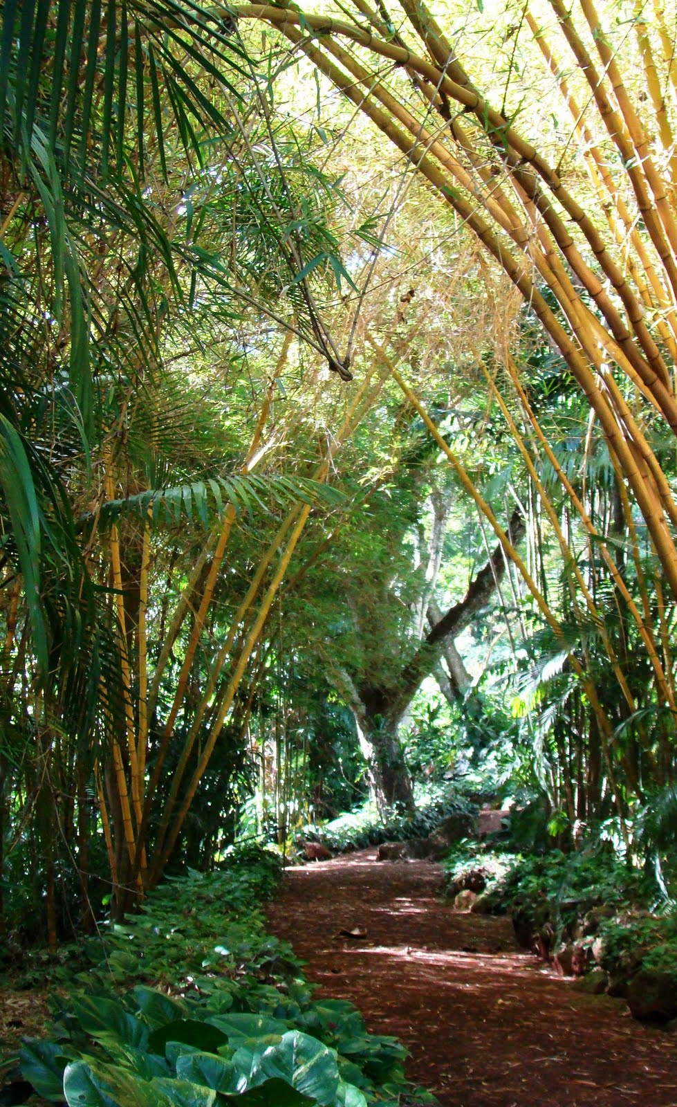 Serenity in the Garden: National Tropical Botanical Garden - Kauai