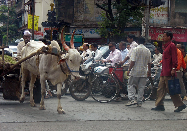 bullock cart on city streets