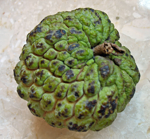 single custard apple