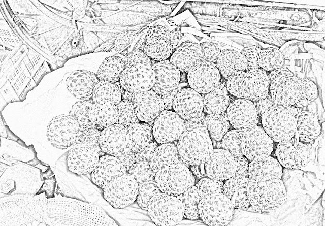 custard apples illustration