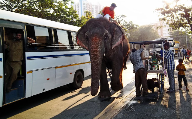 elephant on busy road