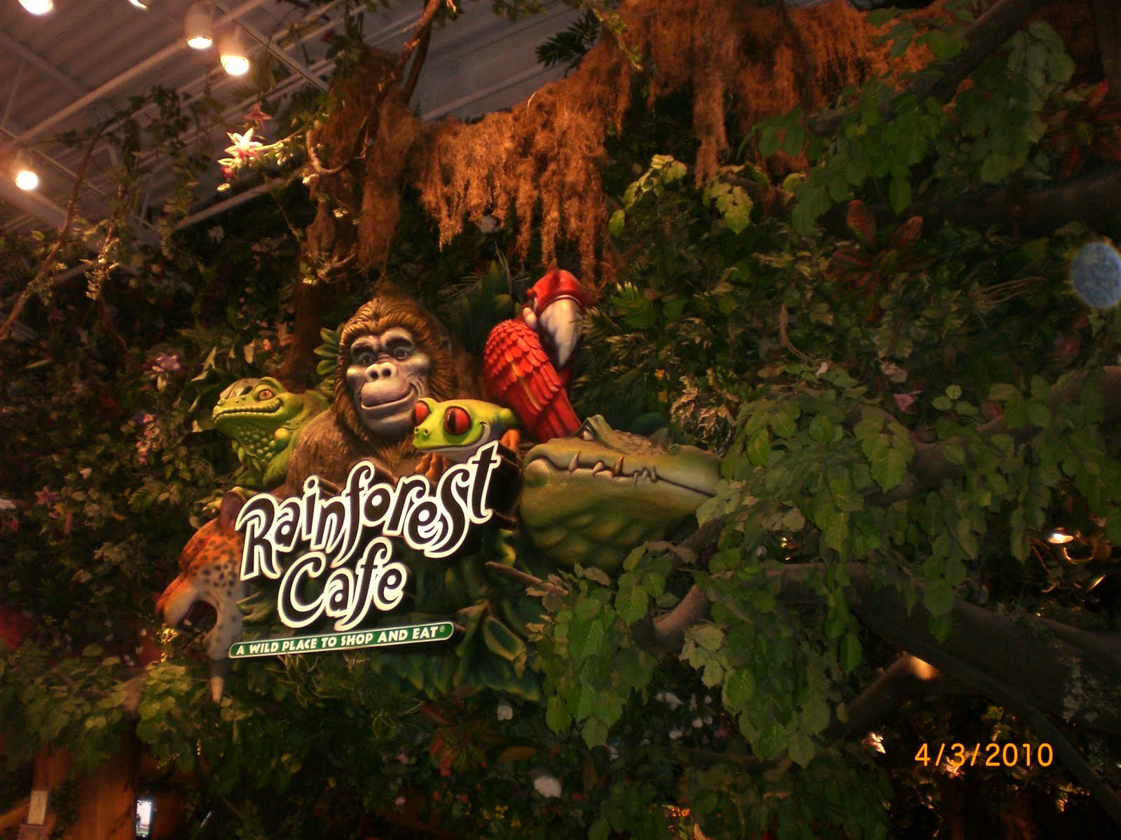 Images Of The Rainforest Cafe