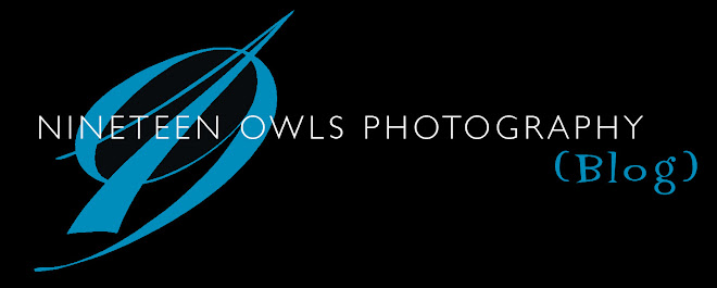 Nineteen Owls Photography