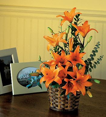 http://3.bp.blogspot.com/_61y3ygVi0L4/SoziFKt0FDI/AAAAAAAABNs/TEU2m_HbORk/s400/Asiatic+Lilies.jpg