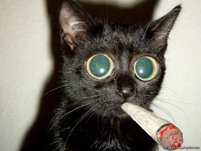 funny wallpaper pics. Cat Smoking Funny Wallpaper