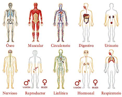 revisión masaje sexual tetona