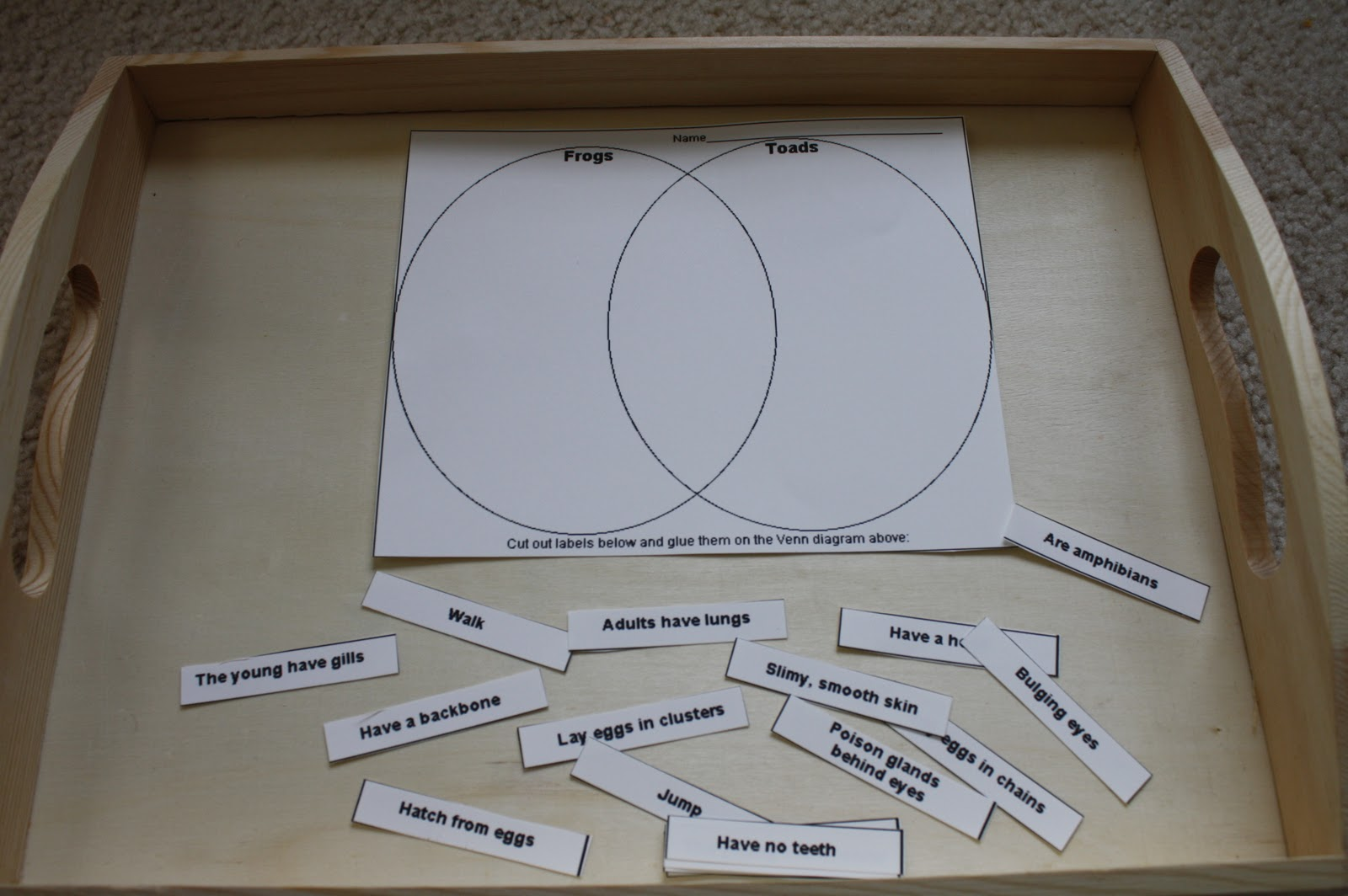 Frog unit nurturing learning venn diagram from enchanted learning parts of a frog pooptronica Gallery