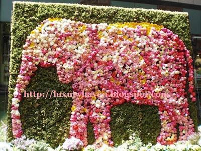 fukuoka flowers animal garden