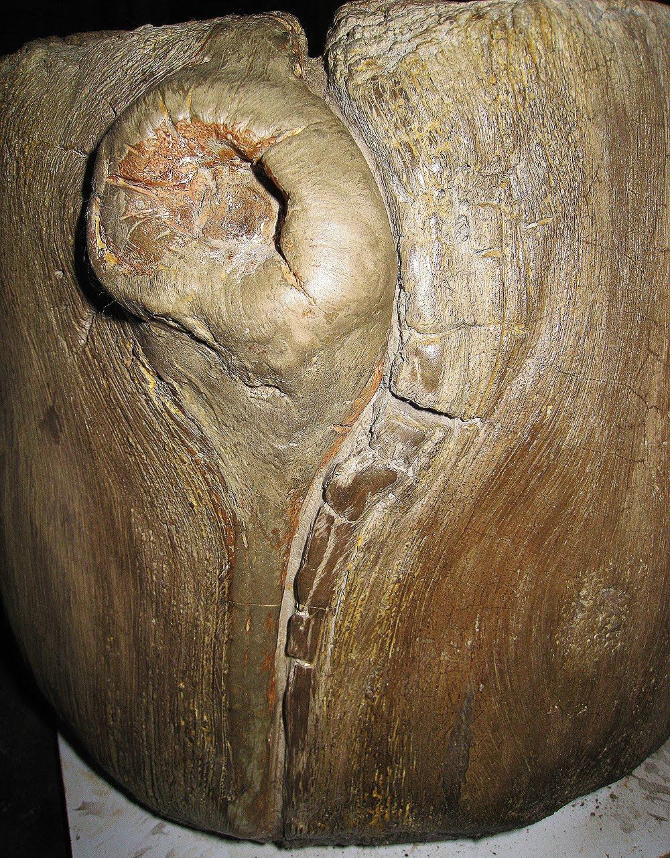 Advanced faux bois sculpting for Faux bois painting technique