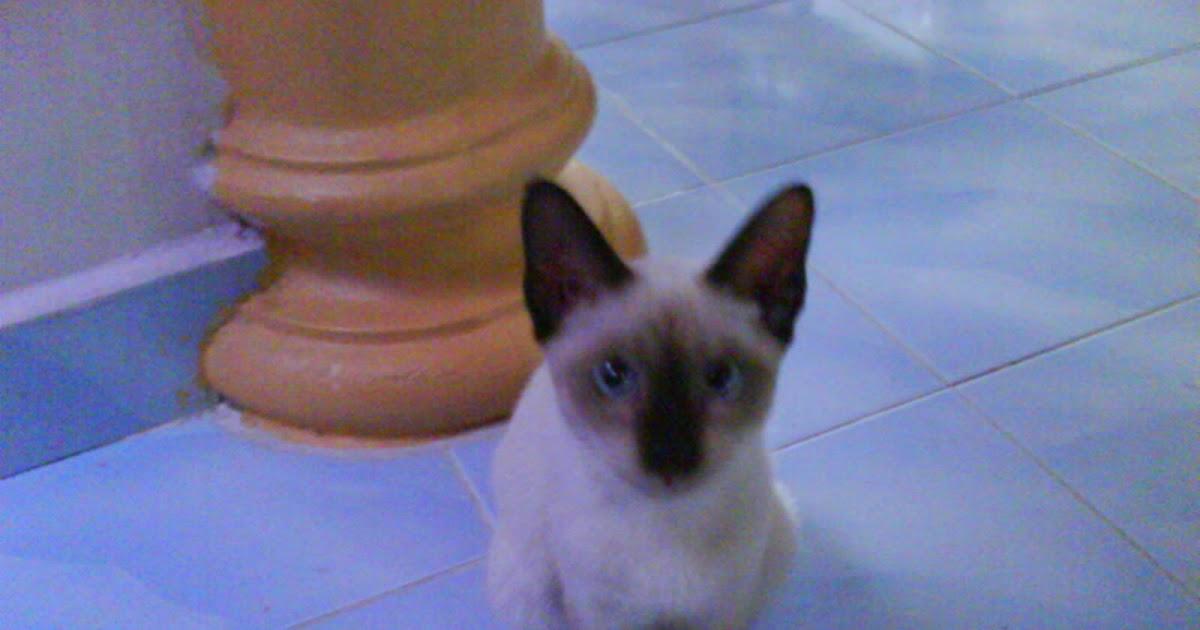 Gambar Kucing Rindu godean.web.id