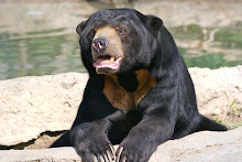 A Handsome Sun Bear