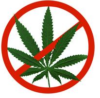 Marihuana: argumentos en contra de la legalización.