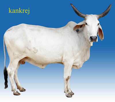 CVPS Cow Power Program For production of  Electricity<br />