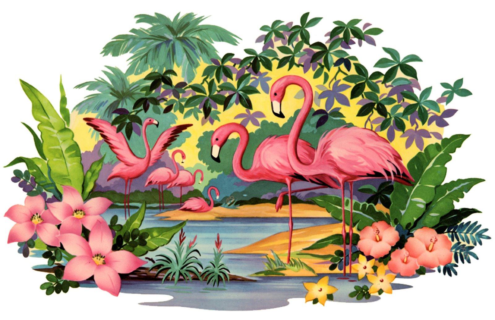 [flamingo.jpg]