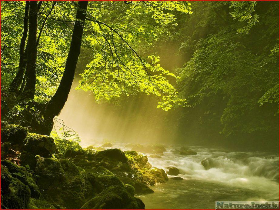 [The+Villa+landscapes_1_forest+green.JPG]
