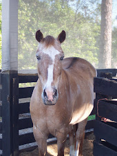 Tia's horse