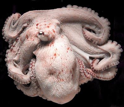 Weird Things Octopus