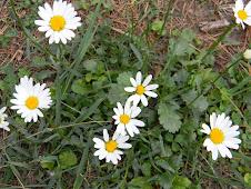 पार्क एस्टेट के सामने घास पर खिले फूल