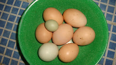 Farm Fresh Eggs Daily
