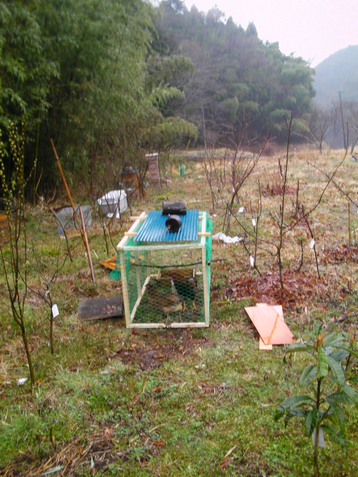 My corner of japan the no more secrets chicken tractor for Big chicken tractor