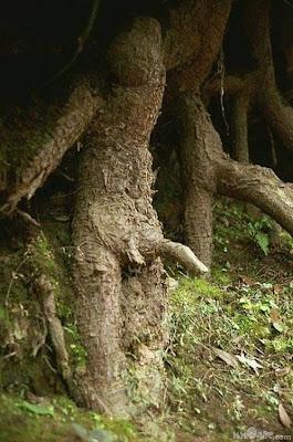 نباتات ولاتفهمونا Nasty+Nature+(7).jpg