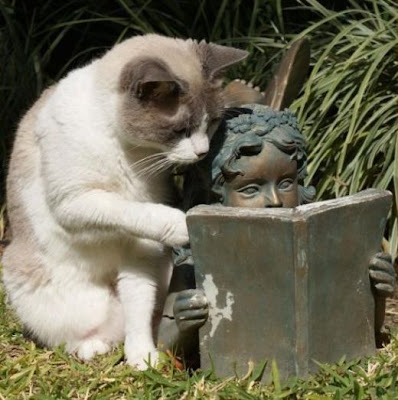 [Image: Cat_Reading.jpg]